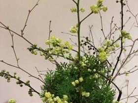 「青文字」の花です。とても春らしく素敵です。