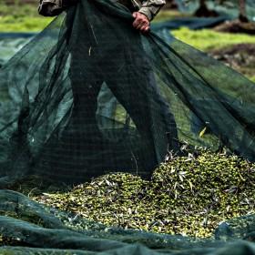 man harvesting in remole